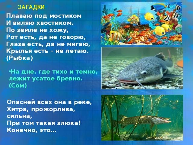 Загадки детям про рыб с картинками
